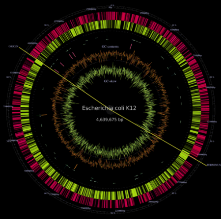 Genome mapping of Ecoli plasmid